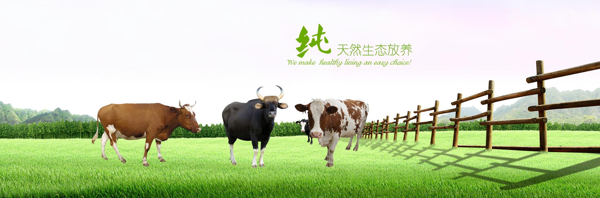 江西养牛基地
