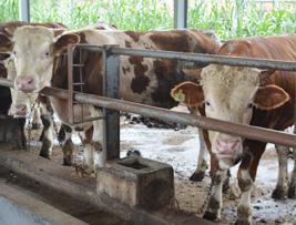 江西佳和农业牛场